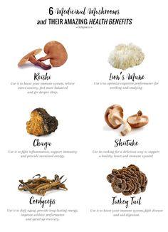 6 Medicinal Mushroom