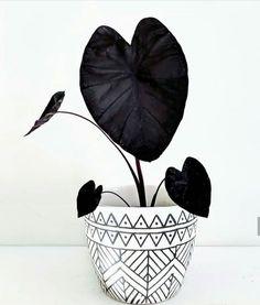 Absolutely in love 🖤 Repost - - - This black magic alocasia has got me spellbound ✨🧹🌿✴️✨ . Brick Patterns Patio, Belle Plante, Lush Lawn, Plants Are Friends, Black Garden, Ikebana, Black Magic, Plant Decor, Indoor Plants