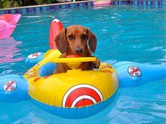 Weenie Dogs, Dachshund Puppies, Dachshund Love, Cute Puppies, Cute Dogs, Doggies, Daschund, Dapple Dachshund, Animals And Pets