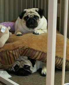 Double decker pug bed! (Lego Movie!)