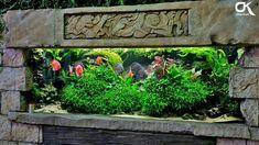 Super cool discus aquarium! Aquascaping, Fish Tank Terrarium, Aquarium Terrarium, Diskus Aquarium, Green Lettuce, Discus, Farmhouse Interior, Winter Garden, Fish Tanks