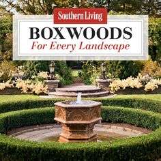 Boxwoods have been the backbone of Southern gardens for centuries, and new selections are now offering solutions for every landscape.