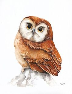 ARTFINDER: Pygmy Owl by Karolina Kijak - Original watercolors of Pygmy Owl Paper 300g,  100% cotton size 23x31cm  Follow me on facebook: https://www.facebook.com/kijakwatercolors