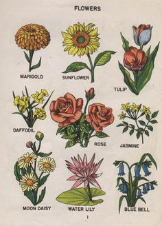 Aesthetic Trippy Flower Drawings in aesthetic flower drawing Grunge Aesthetic Flower Drawing Artsy Flower Drawings Aesthetic Vegetal Concept, Kalender Design, Art Hoe Aesthetic, Aesthetic Drawings, Aesthetic Vintage, Aesthetic Tattoo, Arte Sketchbook, Plant Drawing, Drawing Flowers