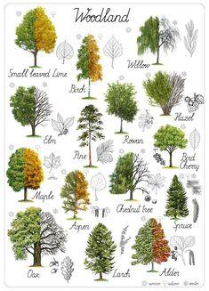 Montessori Educational art Woodland Home Decor Digital Printable Insta… Horticulture, Leaf Identification, Popular Tree, Tree Leaves, Tree Tree, Oak Leaves, Detailed Drawings, Art Education, History Education