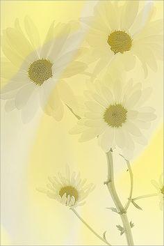 Yellow #botanicalife #spring