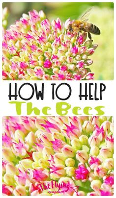 How to help the Bees. Plant wildflowers in your garden. Gardening tips and ideas. The Flying Couponer | Family. Travel. Saving Money.