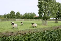 Sheep Illustration, Garden Swimming Pool, Horse Stables, Green Life, Dream Garden, Permaculture, Hedges, Animal Shelter, Landscape Architecture