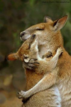 Moments Tendres de Chats, Chiens et autres Animaux qui se font des Câlins - Ici, un Kangourou et son petit