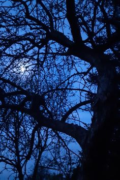 Moon caught in the apple tree the other night. #writer #writerslife #writerlife #writersofig #writerscommunity #author #authors #writers #authorlife #life #WritingCommunity