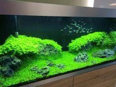 Amazing Aquascape Freshwater Gallery Ideas 94 #AquariumTips