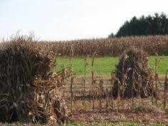 Haystacks in Pa.