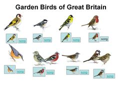Get your pupils inspired with a bird watch assembly #assemblyideas #teaching