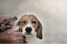 Pet Photography - 20 Awesome Examples #dog #bathtime