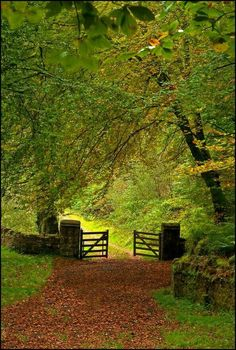 This reminds me of the lane Amy walked when she was approached by an unwelcome visitor...