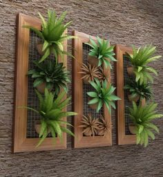 Inspiring Beautiful Minimalist Vertical Garden For Your Home Backyard goodsg. Inspiring Beautiful Minimalist Vertical Garden For Your Home Backyard Hanging Succulents, Succulents Garden, Succulent Frame, Hanging Planters, Air Plants, Indoor Plants, Backyard Plants, Green Plants, Exterior Design