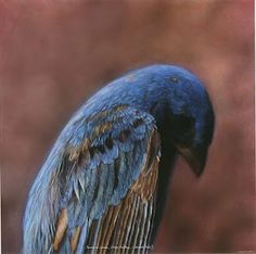 Love the bluebird