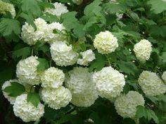 10 pięknych roślin, które warto mieć w ogrodzie