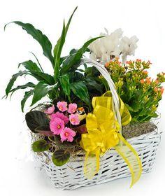 European Blooming Garden - Blooming Plants - Beneva.com