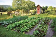 """""""Top Organic Vegetable Gardening Challenges and How to Overcome Them"""" Get solutions for common organic vegetable gardening challenges, including pest control, soil fertility issues, weed control and summer drought. From MOTHER EARTH NEWS Magazine"""