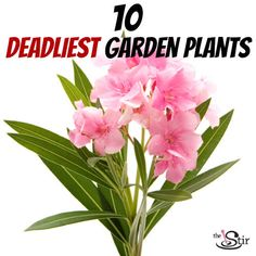 Watch your kids closely around these common garden plants Danger Photo, Oleander Plants, Common Garden Plants, Poison Garden, Planting For Kids, Poisonous Plants, Water Features In The Garden, Patio Makeover, Baby Health