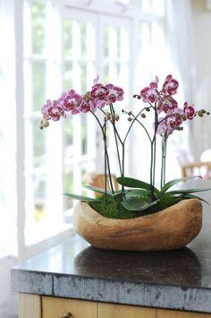 Frank's Natur & Pflanzen Blog - It´s My Live