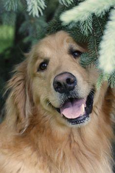 Es un perro modelo de portada, simplemente bellísimo...
