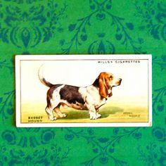 Vintage Basset Hound Cigarette Card, English Wills Dog Series $2.00