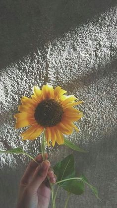 Yellow Flowers, Beautiful Flowers, Sunflower Pictures, Sunflower Wallpaper, Sunflower Flower, Flower Aesthetic, Tumblr Wallpaper, Mellow Yellow, Yellow Sun