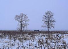 Тупик.Ru: Два дерева*
