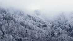 Cold, Snow, Forest, Winter, Trees, Fog, Foggy, Snowing