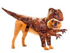 C'est bientôt Halloween, et les fanatiques de déguisements vont s'en donner à cœur joie. Mais la mode n'est désormais plus au déguisement «normaux», mais bien ceux pour animaux, notamment pour les chiens. Ces costumes canins se vendent comme des petits-pains, […]