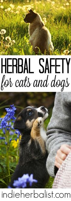 There are a few important differences in the approach between using herbs for yourself and using herbs for your pets.
