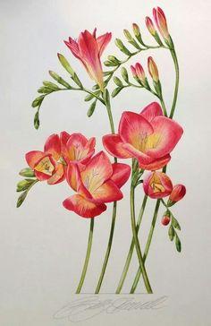 Billy Showell http://www.pinterest.com/katbarine/botanical-beauty/,,,FREESIAS my favorite!