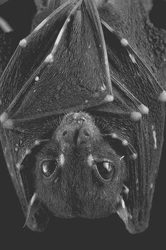 Close up if a bat