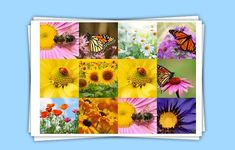 The best photo collage maker tools   Photography   Creative Bloq #Technology