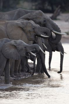 *Watering Hole (by Michael Nichols)