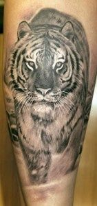 Very cool White Bengal Tiger tattoo!