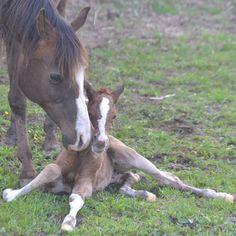 POULAINS 2016 - Elevage chiens et chevaux - Domaine de Mayao et Color Dream