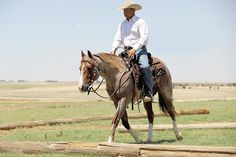 Ranch Riding: 7 Tips to Improve Your Scores Horse Riding Tips, Horse Tips, Ranch Riding, American Quarter Horse, Horse Ranch, Horse Training, Horse Care, The Ranch, Show Horses