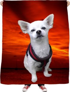 Check out my new product https://www.rageon.com/products/dog-chihuahua-fleece-blanket?aff=BWeX on RageOn!