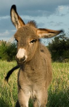 I have 2 donkeys living down the street from where I live!