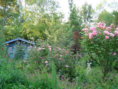 Les 47 Meilleures Images De Jardin Des Lianes Jardins