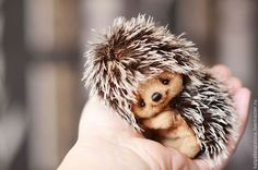 Мишки Тедди ручной работы. Ярмарка Мастеров - ручная работа Ежик Жорик. Handmade. Baby Animals Super Cute, Cute Stuffed Animals, Cute Animals, Life Like Baby Dolls, Life Like Babies, Anime Animals, Felt Animals, Baby Hedgehog, Teddy Toys