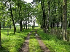 Łąkowa droga