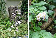 Blüten zwischen weiß und lila