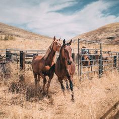 Cute Horses, Horse Love, Horse Girl, All The Pretty Horses, Beautiful Horses, Animals Beautiful, Animals And Pets, Cute Animals, Tier Fotos