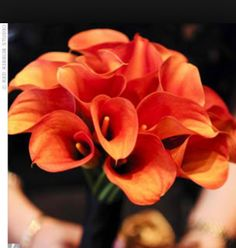 Love these flowers! -- Each bridesmaid carried a tightly packed bouquet of different flowers in bright hues, including this deep orange bouquet of calla lilies. Burnt Orange Weddings, Orange Wedding Flowers, Wedding Reception Flowers, Flower Bouquet Wedding, Fall Wedding, Wedding Ideas, Wedding Stuff, Orange Flowers, Wedding Pics