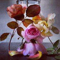 nick knight flowers - Pesquisa Google