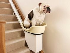 Stairlift for Fat Dogs/Injured Dogs. Yes, this a real device to solve a real problem, but this picture totally makes me laugh.